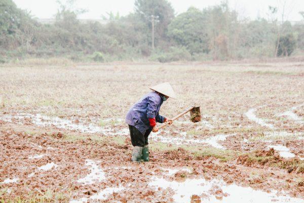 Certificado Digital é necessário para o produtor rural: saiba como a ferramenta pode ser útil